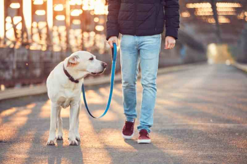 Multifamily pet policies should include designated areas for walking dogs