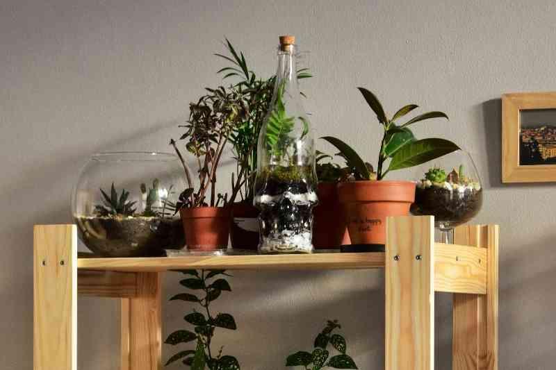 interior design biophilic